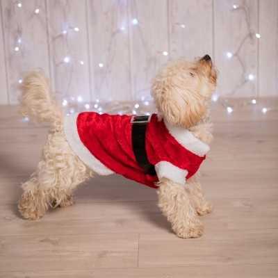 Kerstkleding de hond